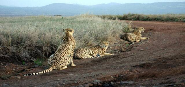 6 Days Tanzania Standard Safaris